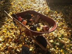 Wheelbarrow full of severed limbs