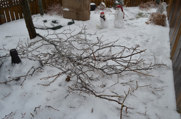 Branch that fell off of tree