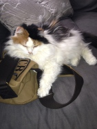 Molly Sitting on Melissa's purse
