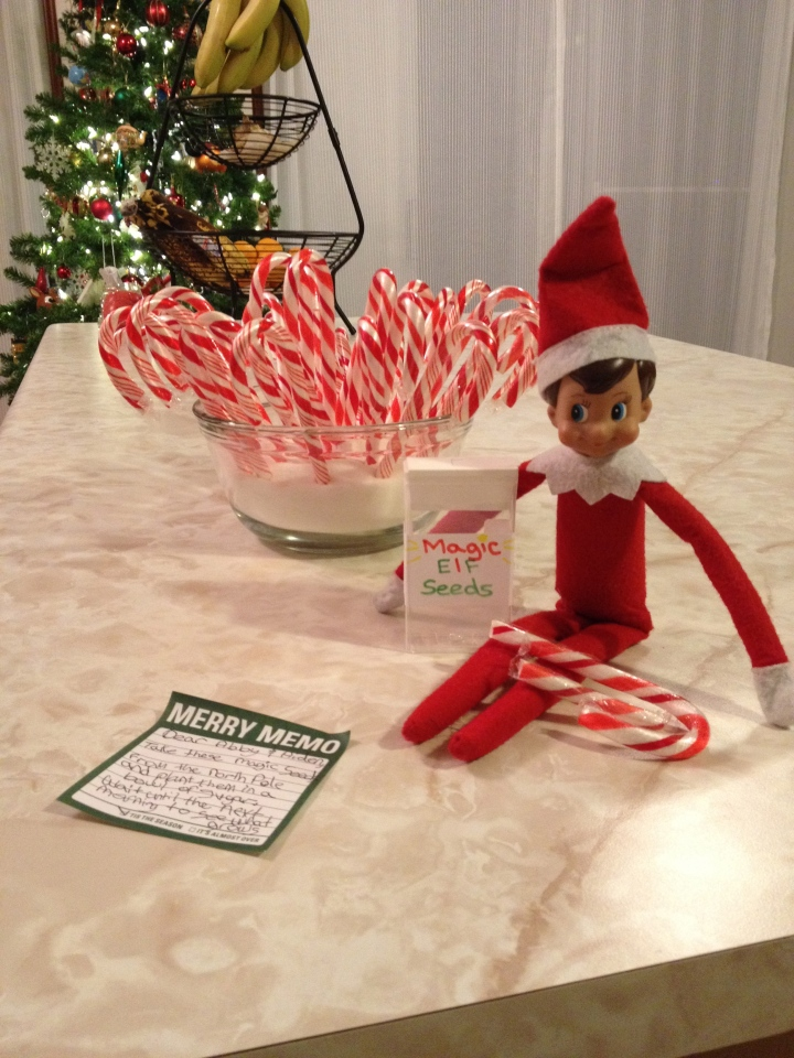 Candy Canes that grew after kids planted Magic Elf Seeds