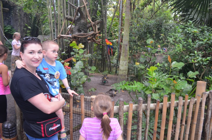 Melissa, Abby and Aiden checking some of the birds