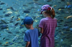 The kids checking out the Tropical Fish