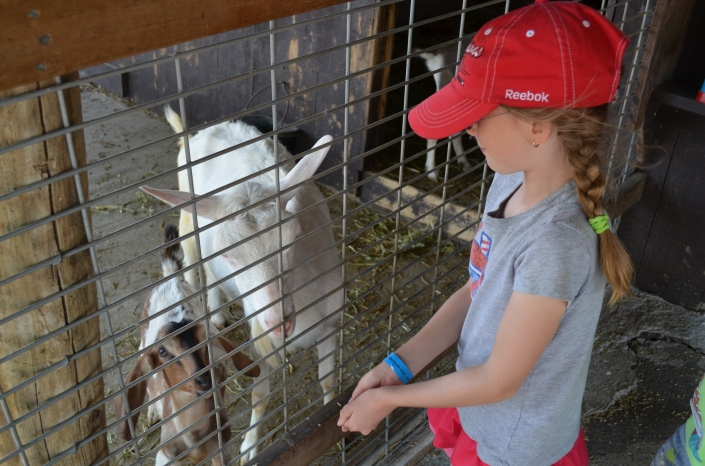 Abby feeding some goats