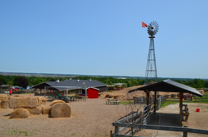 An overview of Springridge Farms