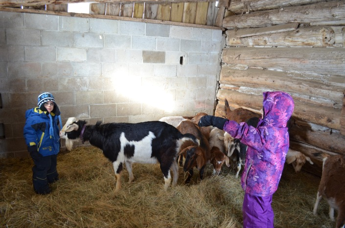 Abby and Aiden inspecting the Goats :)