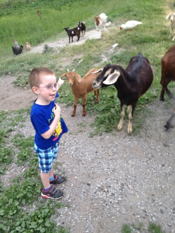 Aiden checking out the goats