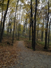A view of one of the trails