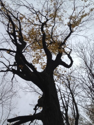 This tree reminded me of the Womping Willow from Harry Potter