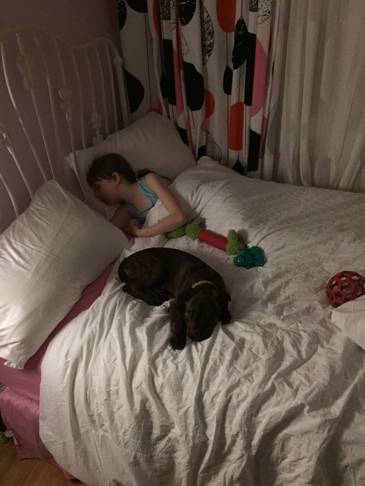 Marley sleeping over with Abby in March 2015.