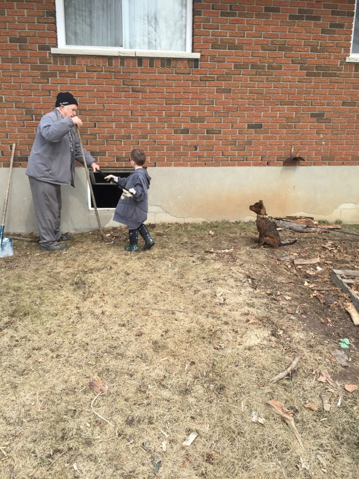 Aiden, Papa and Marley helping clean up the yard after putting in the wood.