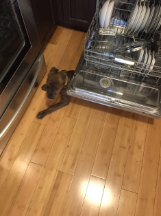 Marley helping with the dishes.