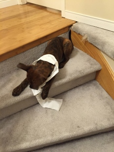 Marley playing with the toilet paper.