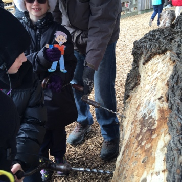 Abby and Flat Stanley drilling for sap at the Maple Syrup Festival at Bradley Museum.