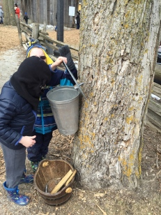 William and Aiden checking for sap at the Maple Syrup Festival 2015.
