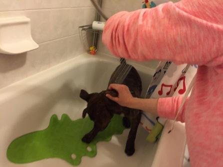 Marley having her first shower.