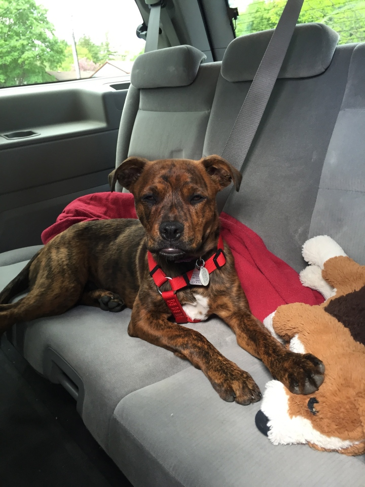 Marley on the ride home