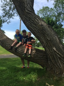 Peter with Colton and Aiden playing on the trees at Montmorency Falls.