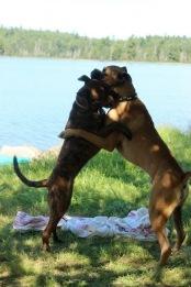 Marley & Chad wrestling