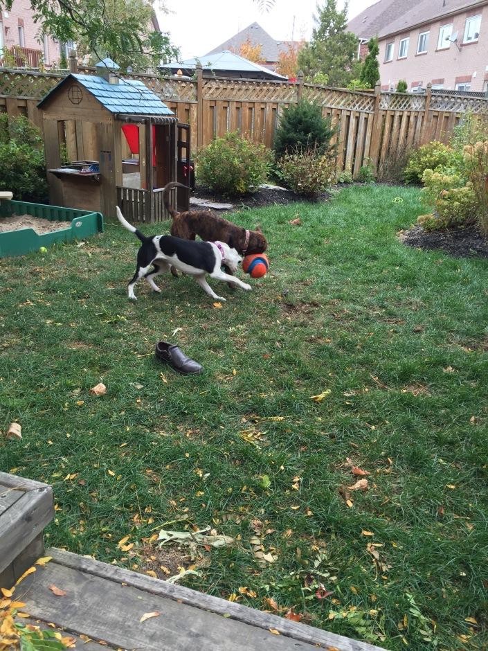 Marley & Lindy (Fall 2015)