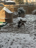 Wrestling in the backyard after a light dusting of snow
