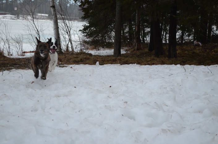 Lindy chasing Lila