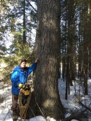 Aaron beside an old White Pine that we same across on our snowshoe walk