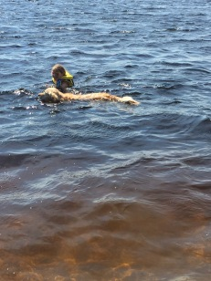 Abby swimming with Andy (Jill's dog)