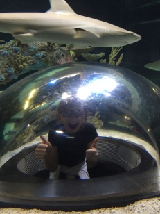 Abby with the Sharks