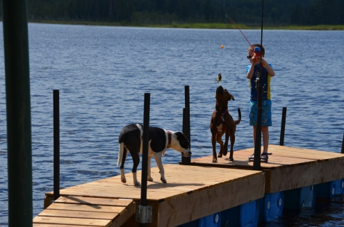 Marley trying to eat the fish Aiden caught!!