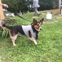 Milo dressed in his tux