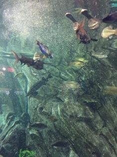 Fish eating