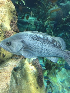 A fish in one of the tanks