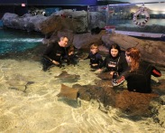 Everyone in the water petting the Stingrays