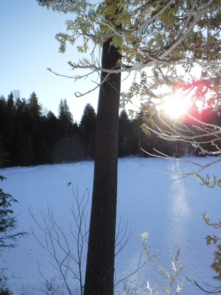 A view from the snowshoe trail