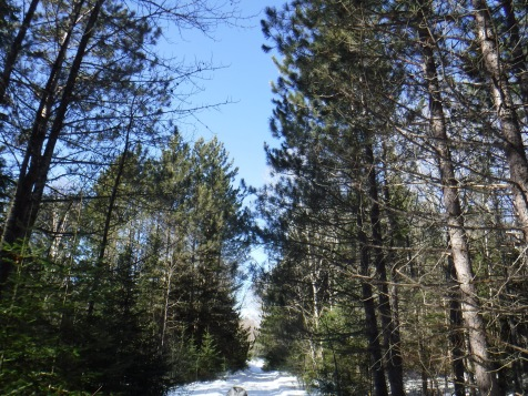 A view down one of the snowshoe trails