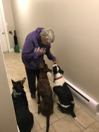Auntie Joyce the dog whisperer. She literally had Milo, Marley and Lindy eating out of the palm of her hand!