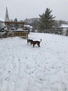 Playing their new backyard after the first snow of the season